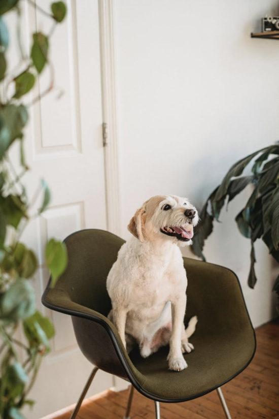 Plantas pet friendly: conheça as espécies não fazem mal aos animais