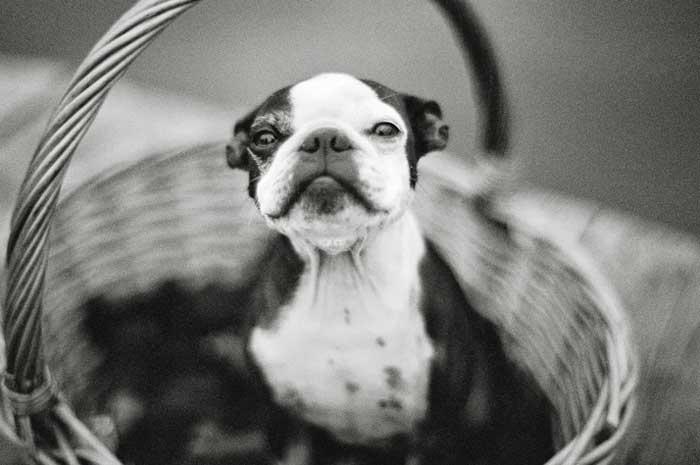 #coisinhasqueamamos: Cachorros na cerimônia de casamento
