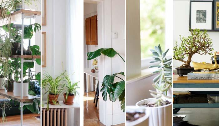 17 inspirações para decorar a casa com plantas